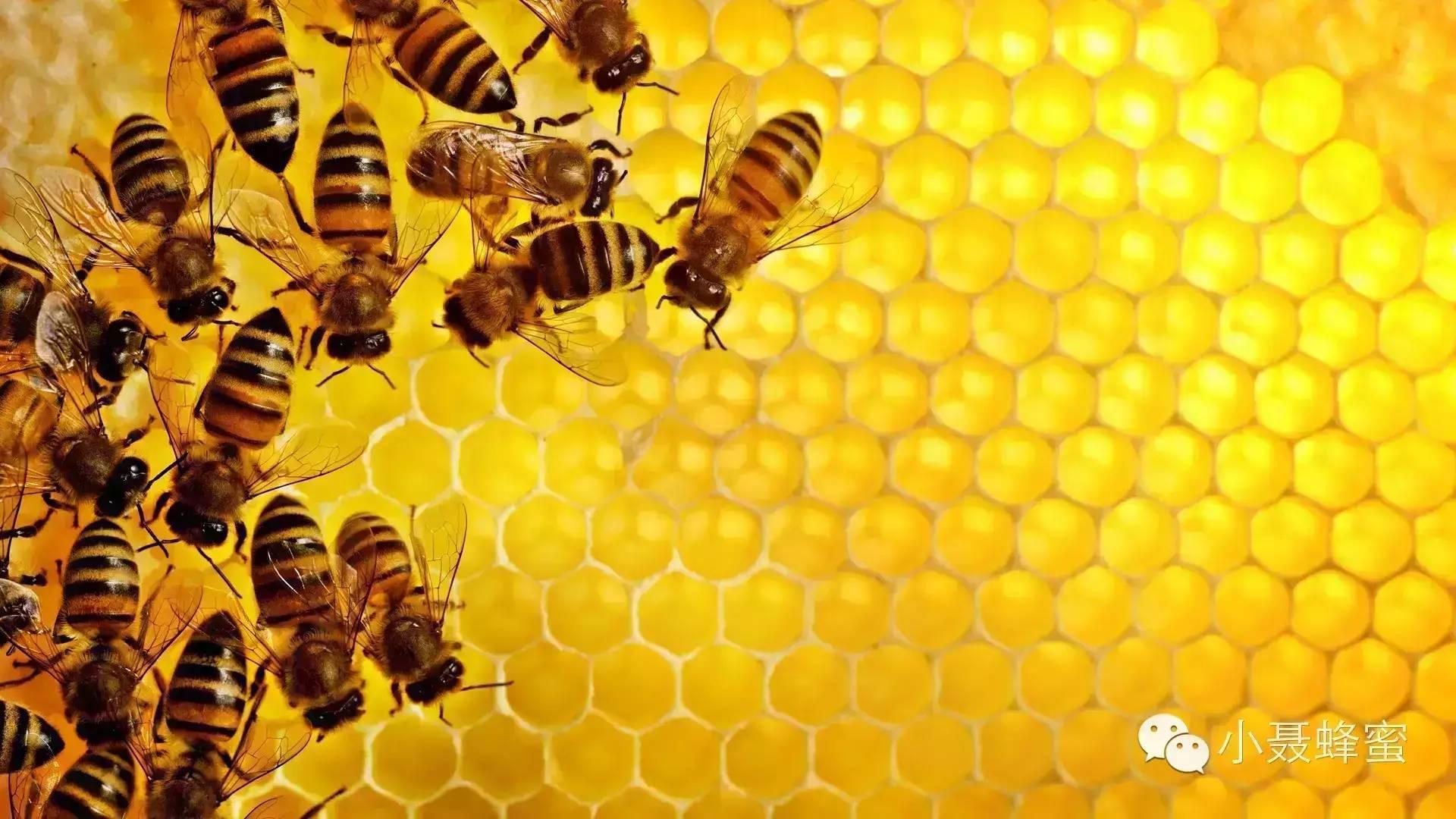 天然纯蜂蜜 无刺蜂属性 蜂蜜 纯天然 农家 怎样鉴别蜂蜜 养蜂方法