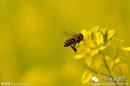 正品蜂蜜 姜蜂蜜 蜂蜜香油汤 蜂蜜面膜怎么做最美白 面膜蜂蜜
