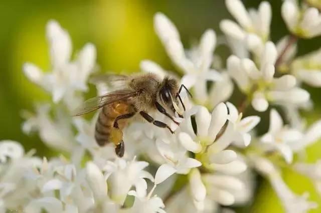 九寨沟蜂蜜 蜂蜜喝法 制作蜂蜜面膜 原生态蜂蜜价格 农家自产蜂蜜