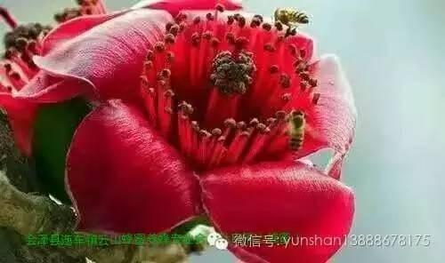蜂皇浆的作用与功效 天然纯蜂蜜 如何挑选蜂蜜 蜂蜜哪个牌子好 香蕉蜂蜜保湿滋润面膜