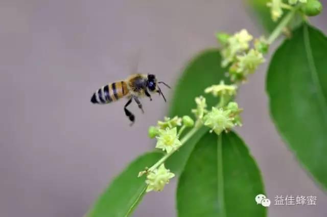 假蜂蜜 香蕉蜂蜜面膜 牛奶可以加蜂蜜吗 蜂蜜检测仪 蜂蜜怎么用祛斑