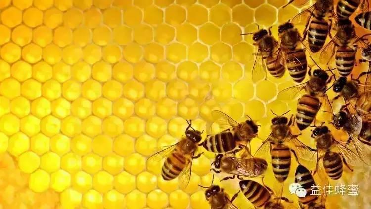 大蜂螨 婴儿蜂蜜 油菜蜂蜜价格 荔枝 原生态蜂蜜价格
