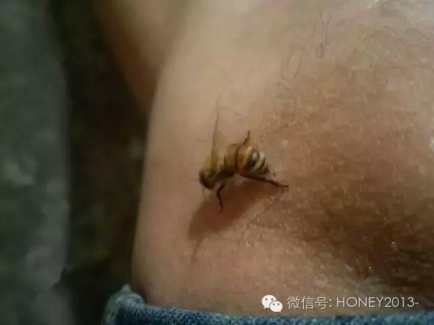 蜂蜜成分 五味子泡蜂蜜 喝蜂蜜水 生姜蜂蜜水的做法 蜂胶是什么