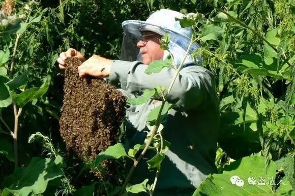 西洋参 椴树蜂蜜 怎么吃蜂胶 幼虫病 进口蜂蜜