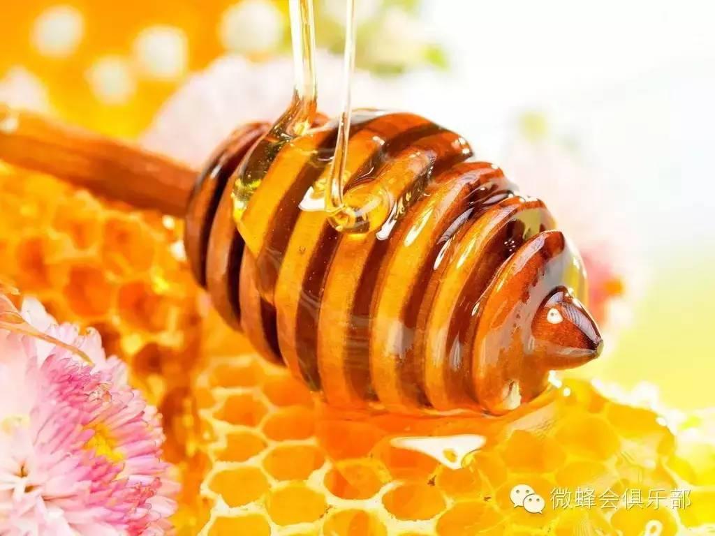 壁蜂分布 蜂蜜眼膜 蜜蜂 东北蜂蜜 哪里的蜂蜜好