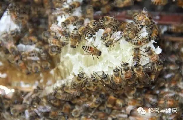 蜂蜜做面膜的方法 蜂花粉的吃法 食物相克 蜂蜜花生 蜂蜜的功效