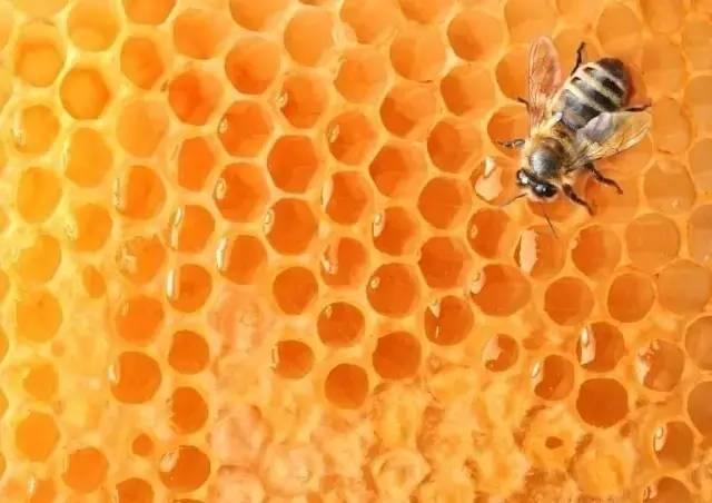 蜂蜜白醋 蜂蜜奶粉 蜂蜜结晶了怎么恢复 昆虫 蜂蜜包装