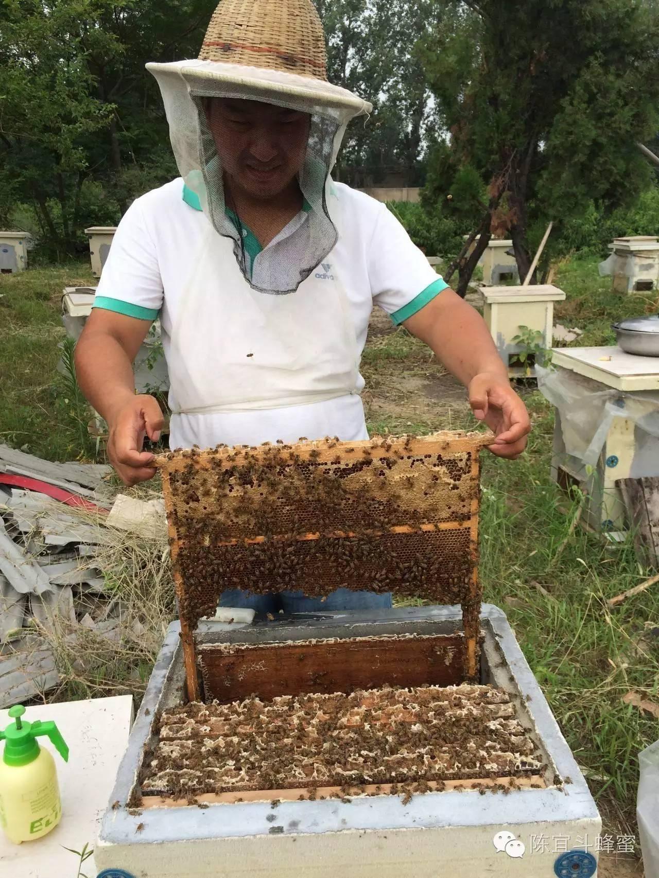 蜂胶的吃法 蜂蜜加醋的作用 哪家蜂蜜好 山楂蜂蜜水 吃蜂蜜的好处