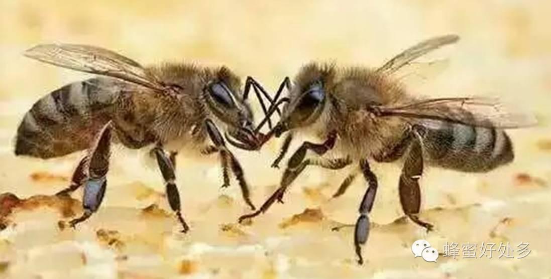 蜂蜜燕麦饼干 降血脂 开发 菊花蜂蜜 野蜂蜜