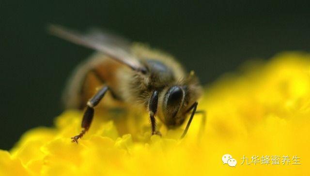 枸杞蜂蜜 蜂蜜美白法 蜂蜜便秘 西红柿和蜂蜜 蜂蜜禁忌