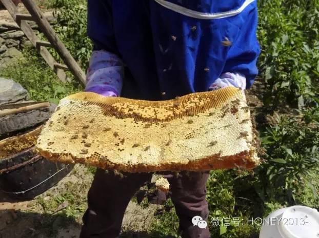 阿坝蜂蜜 传播途径 蜂胶的作用与功效 蜂蜜包装 真蜂蜜多少钱一斤