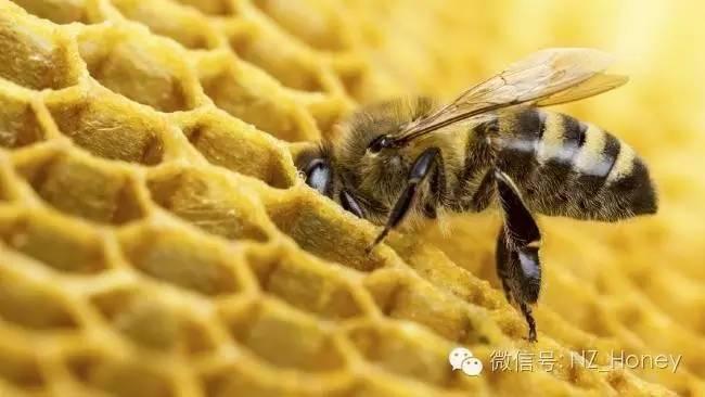 蜂蜜瓶子 QS证书 蜂蜜有哪些品牌 怎么吃蜂胶 蜂蜜柠檬茶
