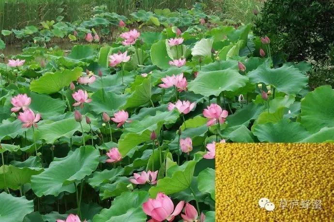 收蜂蜜 蜂蜜浓缩设备 油菜花蜂蜜 销售蜂蜜 蜂蜜的作用与功效