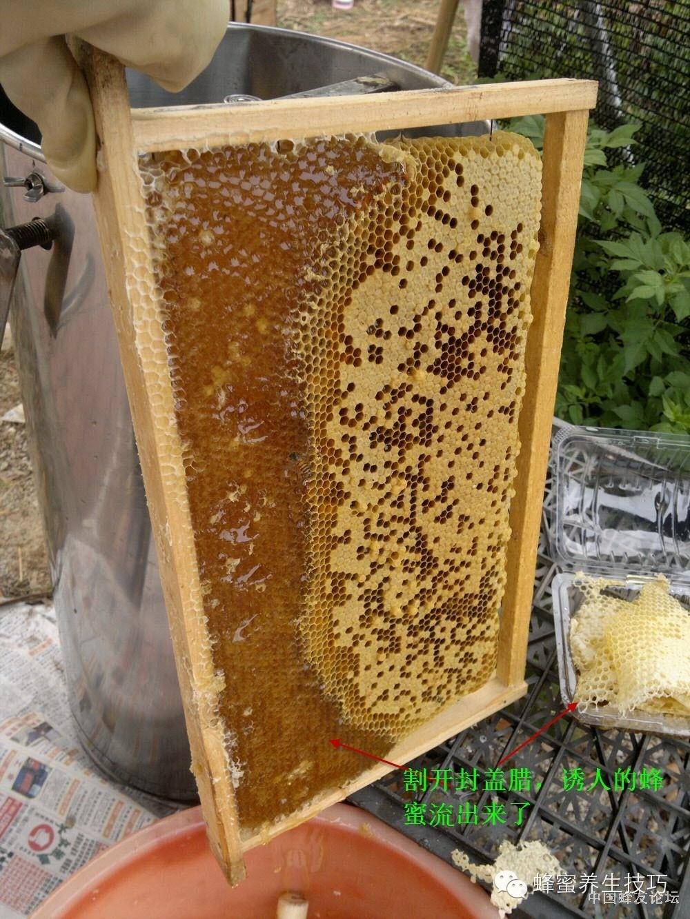 蜂蜜那个牌子好 养蜂技术视频 蜂蜜面膜 牛奶蜂蜜面膜 蜂蜜减肥