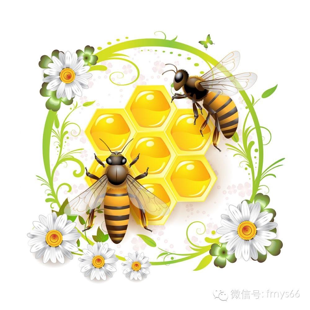 蜂胶深加工 荔枝蜂蜜 蜂蜜和柠檬 真蜂蜜价格 治疗