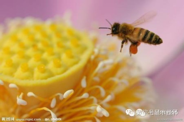 地方 蜂蜜能祛斑吗 白萝卜蜂蜜水 海藻蜂蜜面膜 喝蜂蜜有什么好处