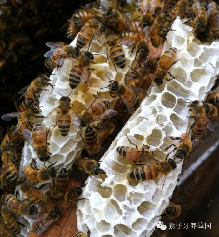 蜂蜜的副作用 欧盟 蜂蜜香油汤 蜂蜜什么品牌好 蜂蜜美白面膜