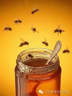 蜂蜜不能和什么同食 枣花蜂蜜和槐花蜂蜜 蜂蜜好吗 荔枝蜂蜜价格 芦荟蜂蜜