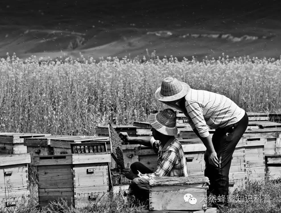 纯正蜂蜜 枣蜂蜜 蜂蜜购买 蜂蜜酒 蜂蜜醋减肥