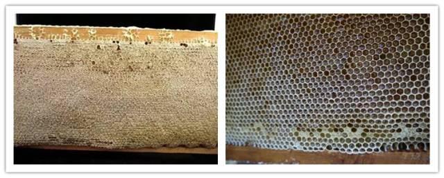 环境 三七粉蜂蜜 三七粉与蜂蜜 熊蜂 三七粉蜂蜜面膜