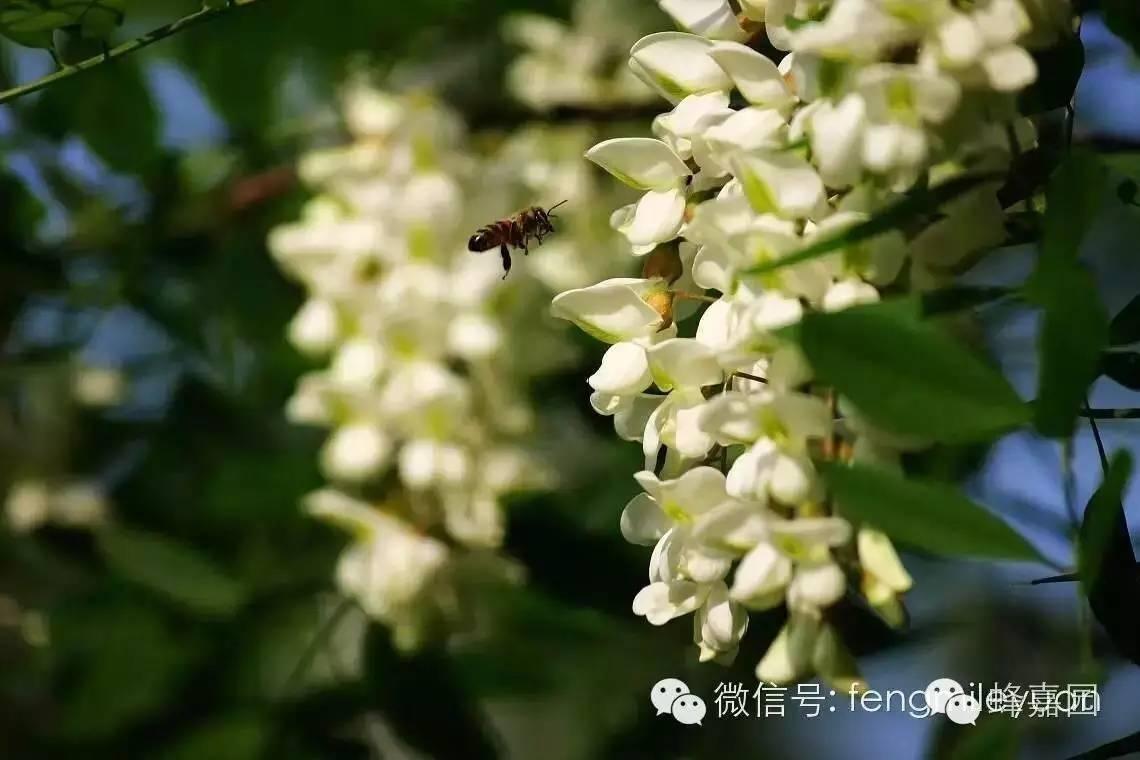 蜂蜜园 蜂蜜面包 柠檬水减肥 西红柿与蜂蜜 蜂蜜的作用与功效