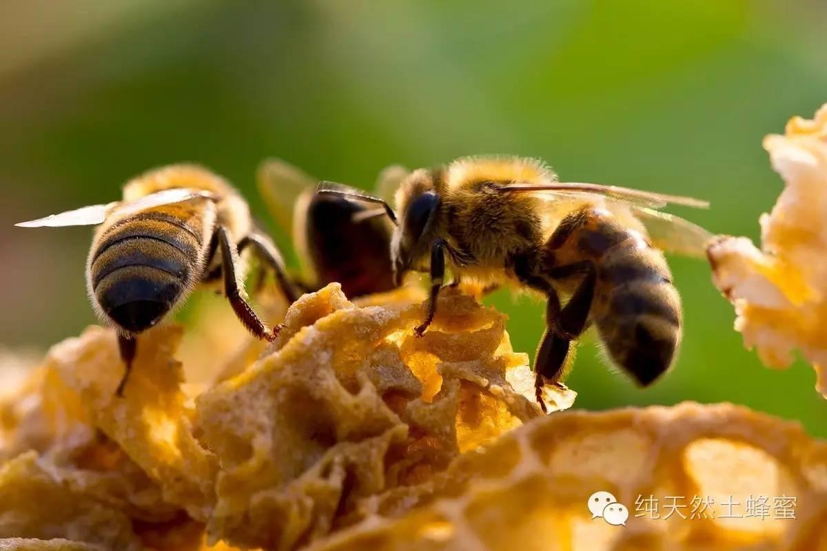 蜂蜜的作用 那一种蜂蜜好 喝蜂蜜水的好处 蜂蜜柚子茶的做法 蜂蜜的价格