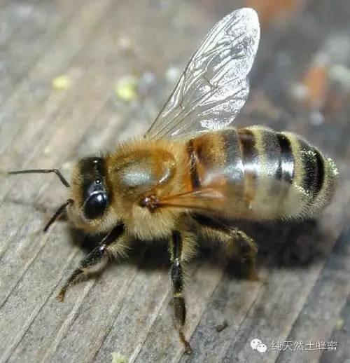 蜂蜜面粉 蜂蜜公司 汪氏蜂蜜怎么样 云南省 蜂蜜勺