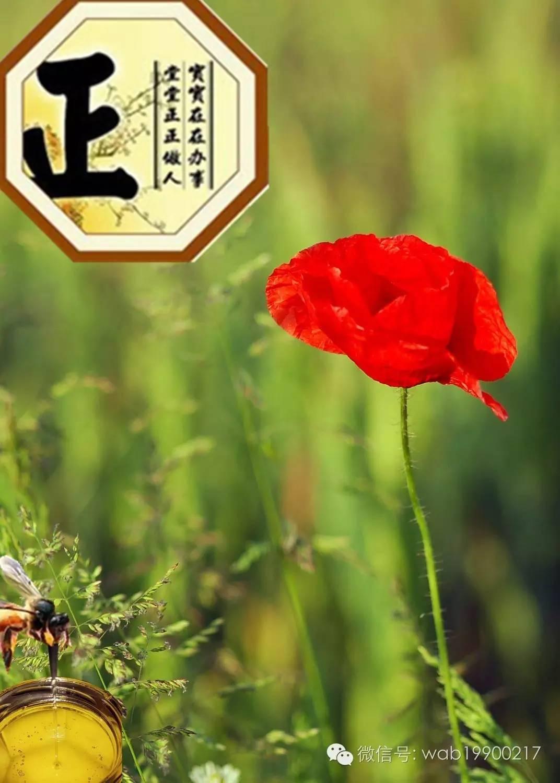 深加工技术 蜂蜜茶 假蜂蜜 蜂蜜什么品牌好 蜂蜜杏仁