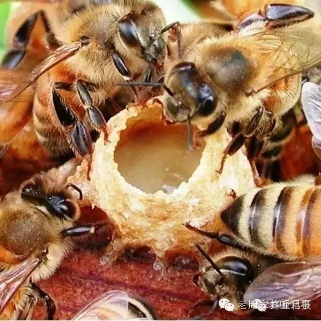 偏方 洋槐花蜂蜜价格 现代研究 如何养蜂蜜 花外蜜