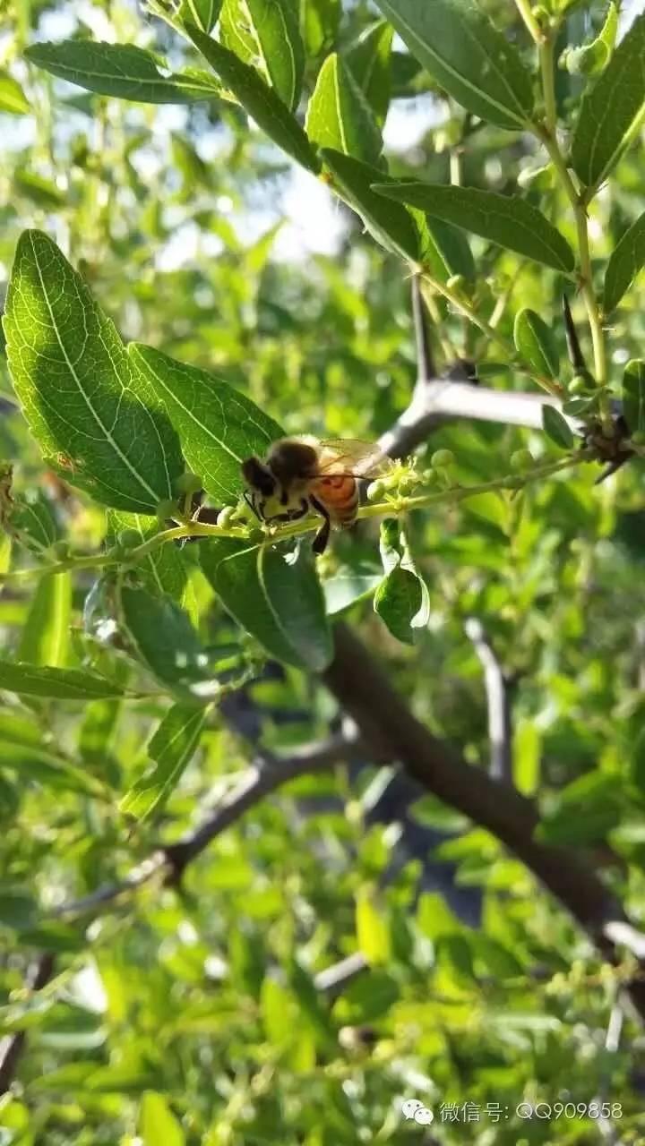 牛奶加蜂蜜 土蜂蜜结晶 蜂蜜水什么时候喝好 蜂蜜香蕉 蜂蜜的好处