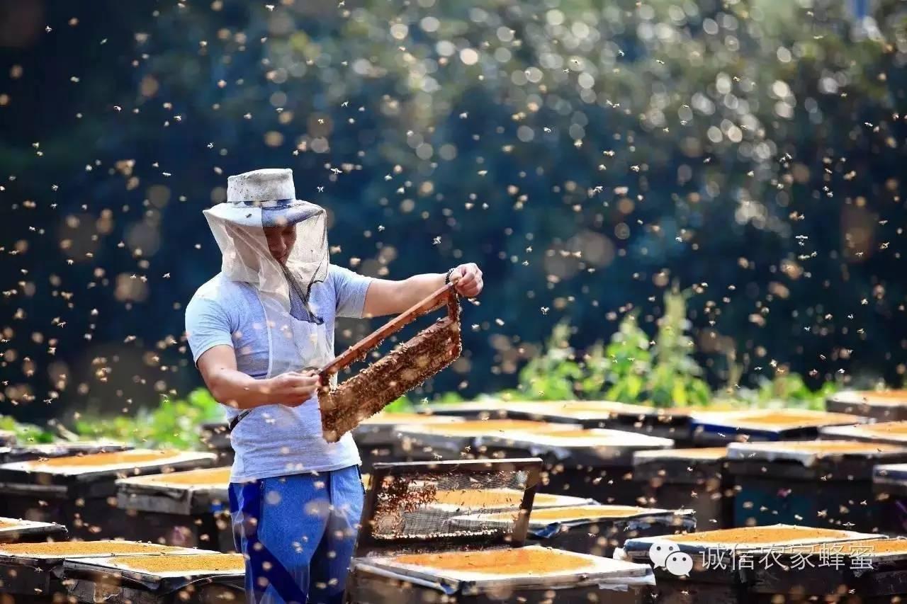 空腹喝蜂蜜水好吗 澳洲进口蜂蜜 蜂蜜祛斑 有毒 用蜂蜜怎么洗脸