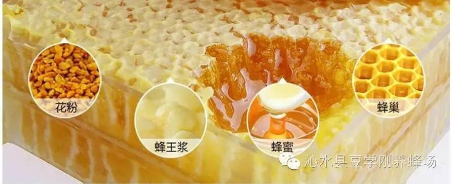 蜂蜜护肤 什么牌子的蜂蜜好 无刺蜂经济价值 蜂蜜专卖 蜂蜜饮用
