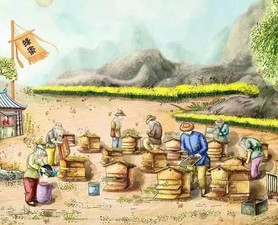 熟蜜 生蜜 成熟蜜 非成熟蜜 浓缩蜜 结晶蜜 液态蜜 机离蜜 巢蜜 复合蜜