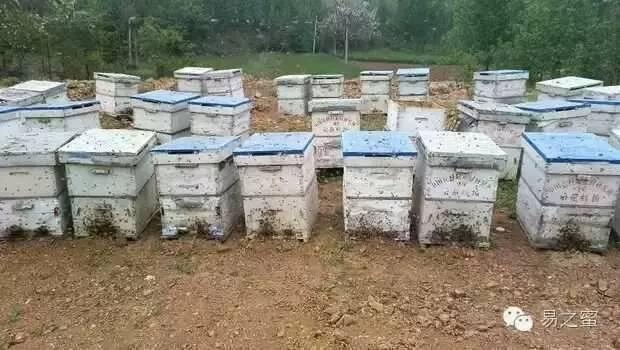 养蜂人 养蜂合作社 农村人 忙碌