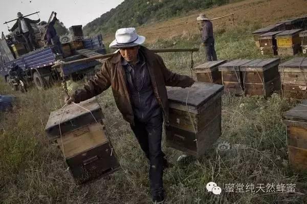 养蜂人 蜂农 蜂蜜价格 蜂蜜企业 GB14963-2011