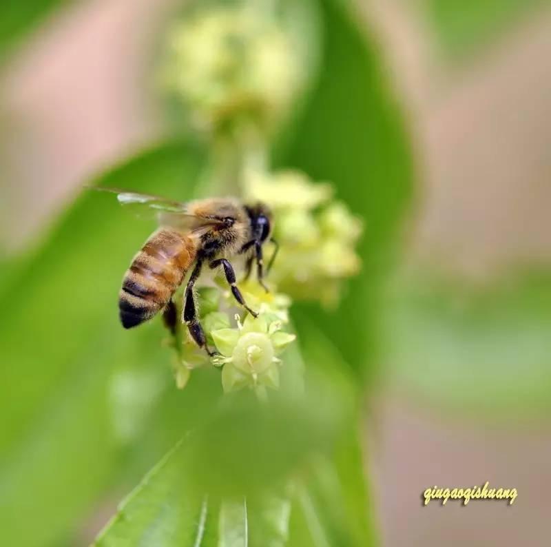 弄清蜂蜜这些误区,才能安安心心喝蜂蜜!