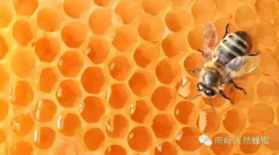 柠檬 蜂蜡可以吃吗 黄瓜蜂蜜面膜 野花蜂蜜 蜂蜜的检测