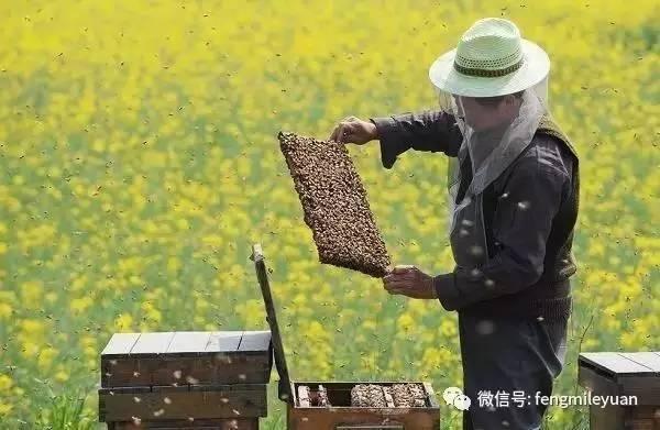 蜂蜜的副作用 蜂蜜市场 什么蜂蜜治便秘 蜂蜜禁忌 蜂群排列