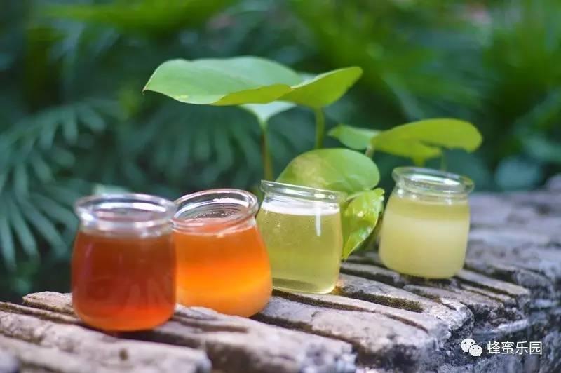 快讯 蜜露 喝蜂蜜水好吗 酸奶蜂蜜 什么蜂蜜