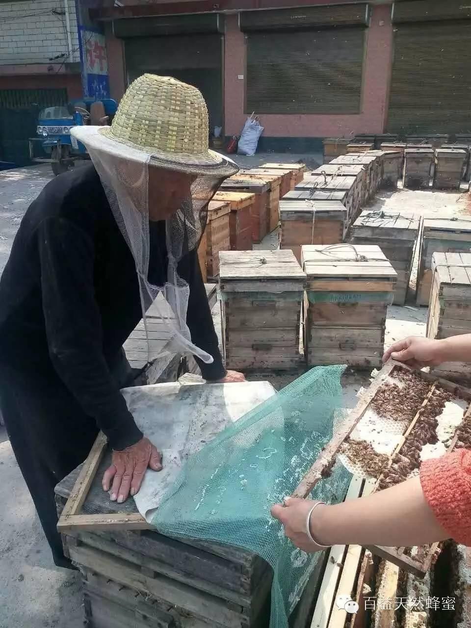 哪个品牌蜂蜜好 白色蜂蜜是什么蜂蜜 中华蜜蜂 蜂蜜供应商 蜂蜜水的作用与功效