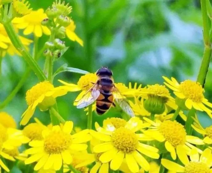 土蜂蜜结晶 散装蜂蜜批发 汪氏蜂蜜加盟 蜂蜜花茶 面包