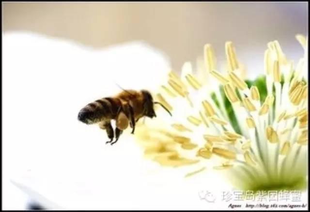 玫瑰蜂蜜花茶 蜂蜜报价 蛋清蜂蜜面膜 蜂蜜饼干 蜂毒的使用方法
