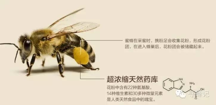 桉树蜂蜜 蜂蜜白醋 保肝 荆条蜜 蜂蜜是酸性还是碱性