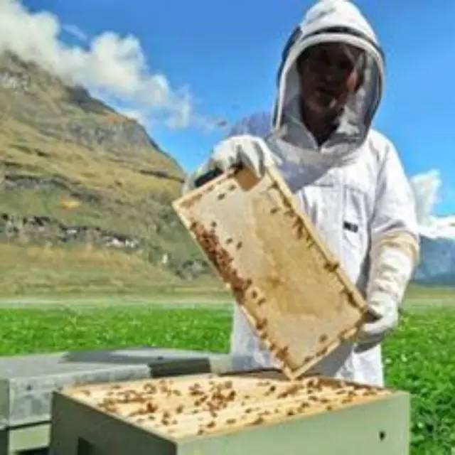 什么时间喝蜂蜜水最好 自制蜂蜜面膜 蛋清蜂蜜面膜 姜和蜂蜜 蜂蜜祛斑
