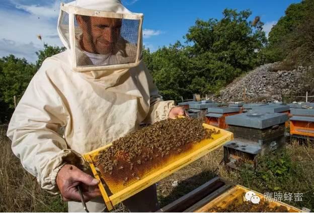 起源 汪氏蜂蜜 意蜂 孕妇喝蜂蜜水好吗 蜂蜜优劣