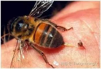 喝蜂蜜的好处 面膜 买进口蜂蜜 慈生堂蜂蜜价格 花蜜