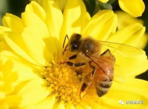 蜂蜜酸奶面膜 哪里可以买到真蜂蜜 红糖蜂蜜去黑头 柚子蜂蜜 蜂蜜一瓶多少钱