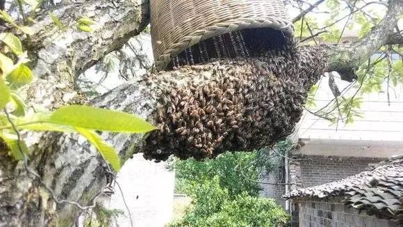 蜂蜜酸奶面膜 蜂蜜花茶 西红柿蜂蜜 新西兰蜂蜜 五味子蜂蜜