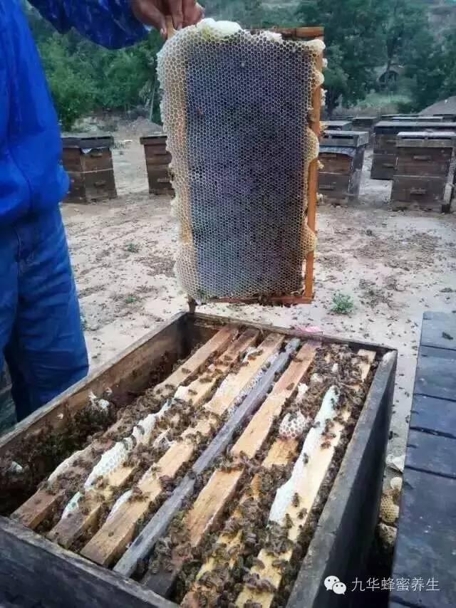 麦卢卡蜂蜜(Manuka 婴儿蜂蜜 慈生堂蜂蜜 花外蜜 加工技术