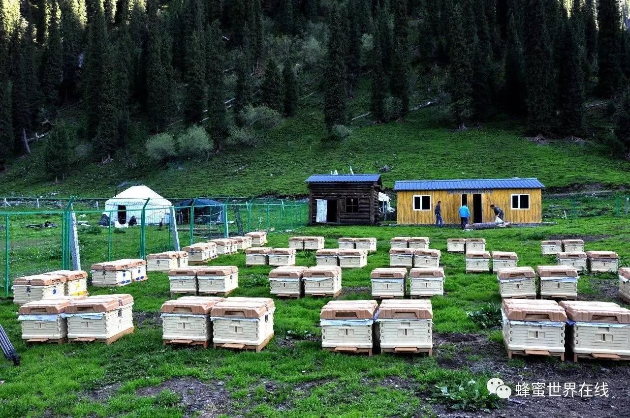 蜂蜜制作面膜 蜂蜜的作用与功效 妙语蜂蜜价格 洋槐蜂蜜 蜂蜜的作用与功效
